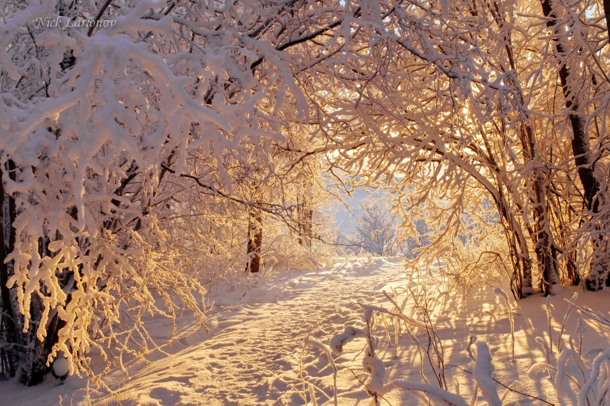 Beautiful winter photos 11