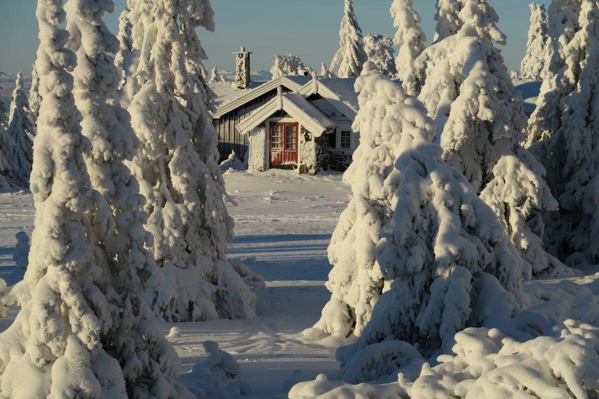 Beautiful winter photos 12