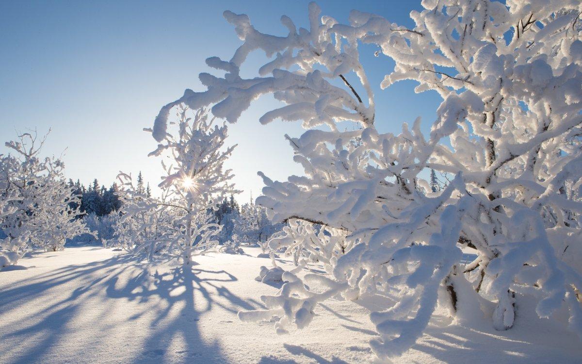 Beautiful winter photos 15