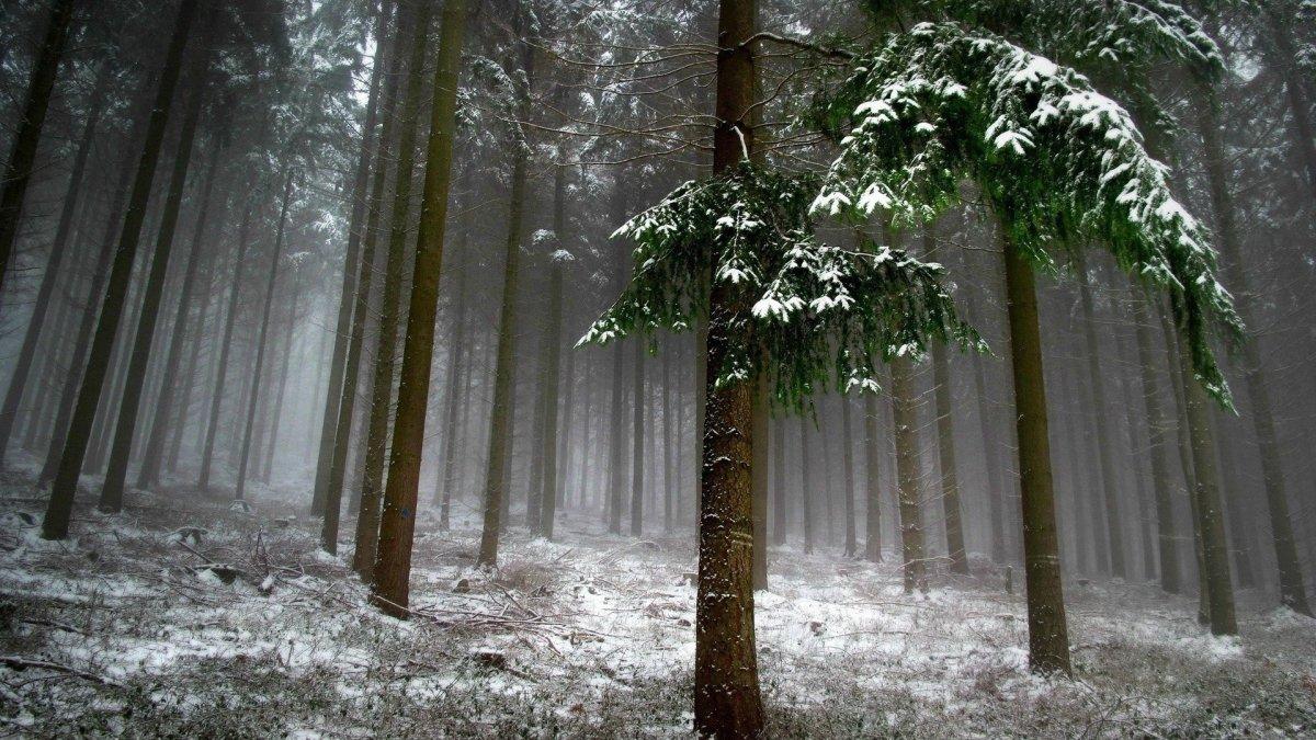 Beautiful winter photos 20