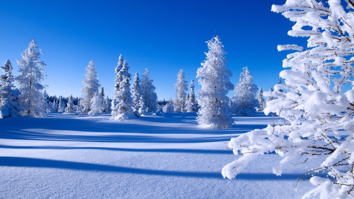 Beautiful winter photos 21