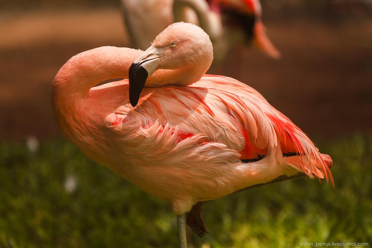 Bird Paradise. Braziliya 05