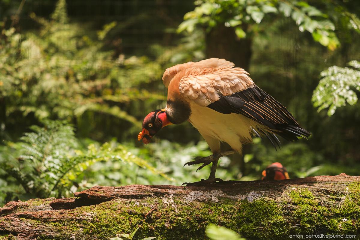 Bird Paradise. Braziliya 11