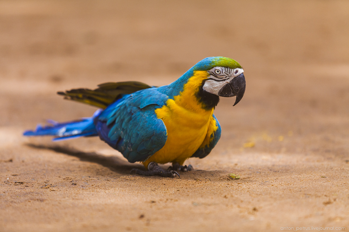Bird Paradise. Braziliya 14