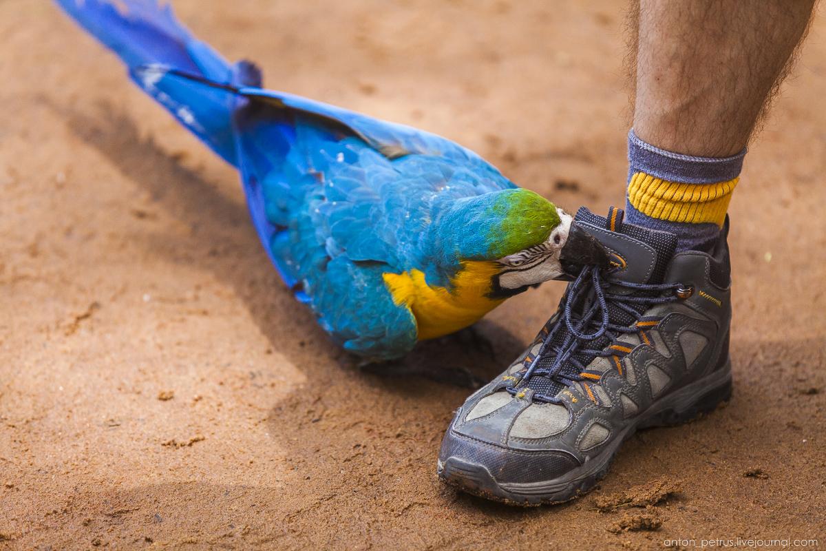 Bird Paradise. Braziliya 15