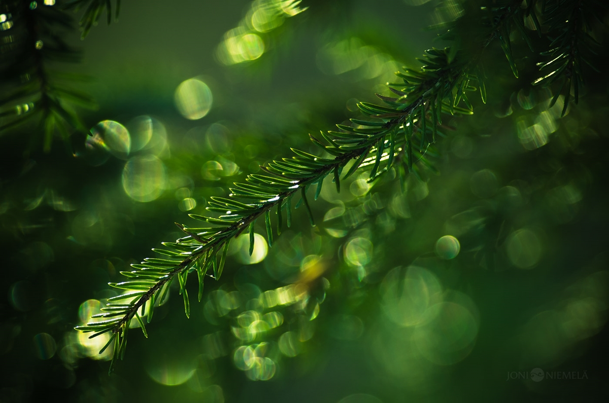 Fantastic bokeh in the works of Joni Niemela 03