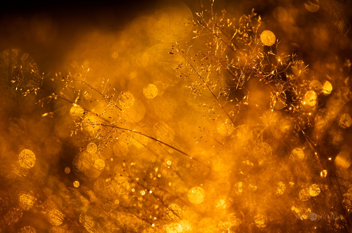 Fantastic bokeh in the works of Joni Niemela 06