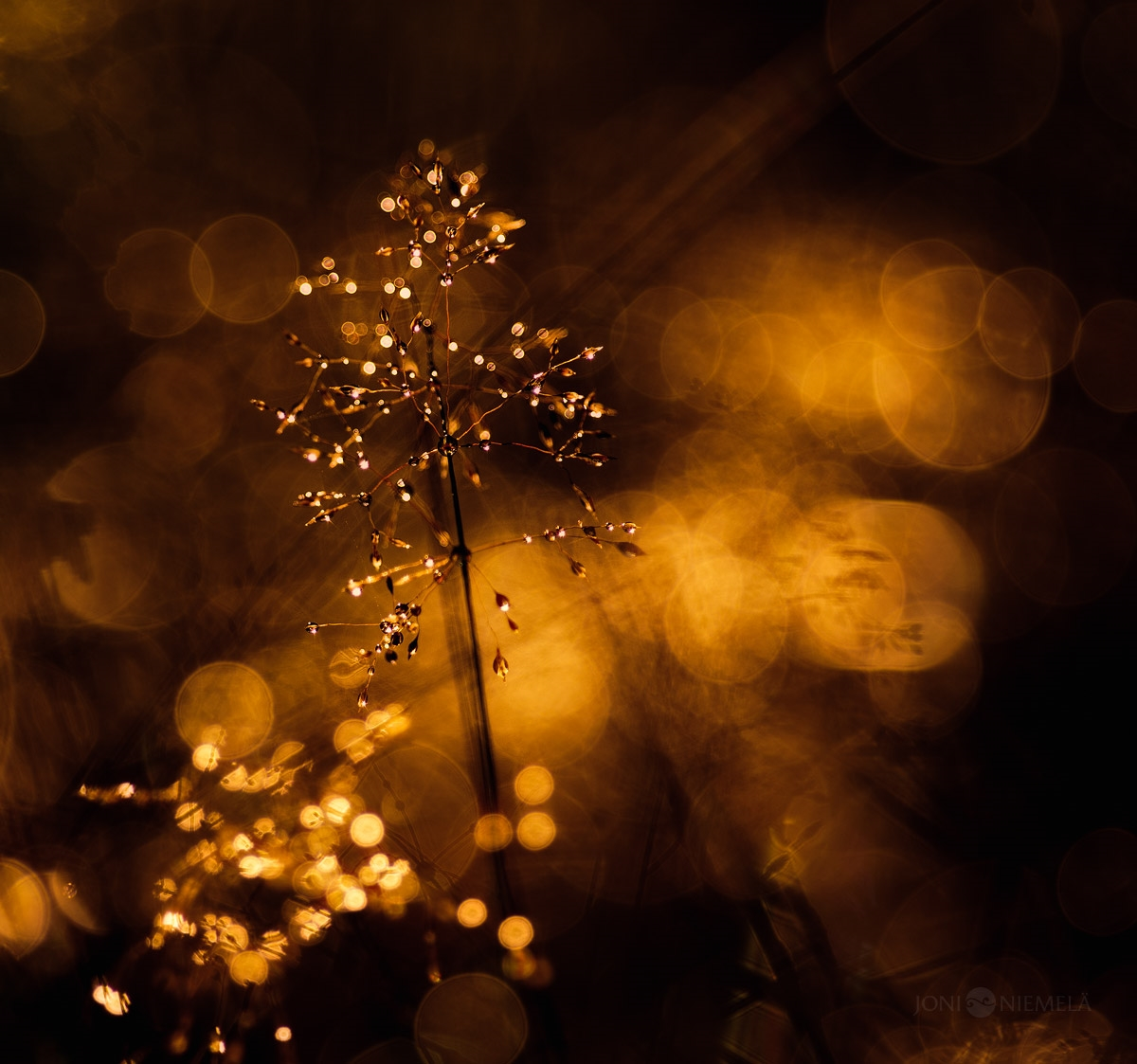Fantastic bokeh in the works of Joni Niemela 09