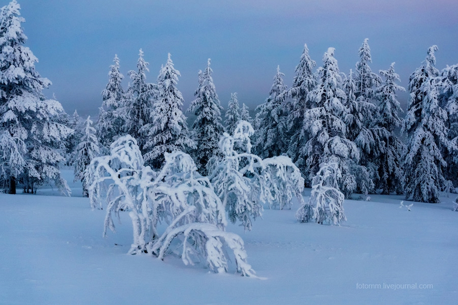 Finland. Snowy landscapes 04