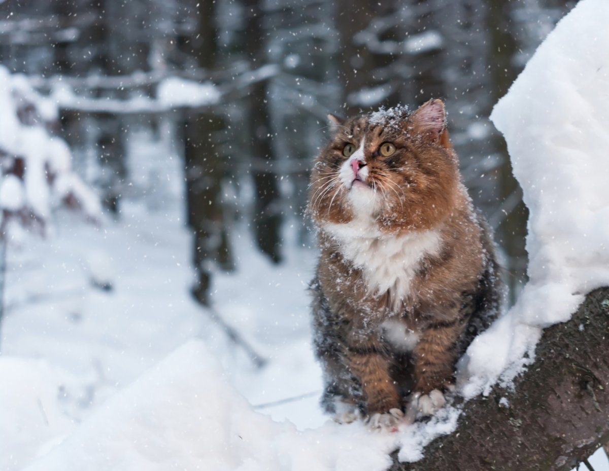 Funny and cute animals in winter 09