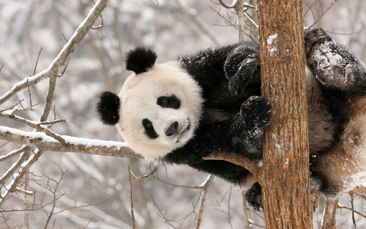 Funny and cute animals in winter 10