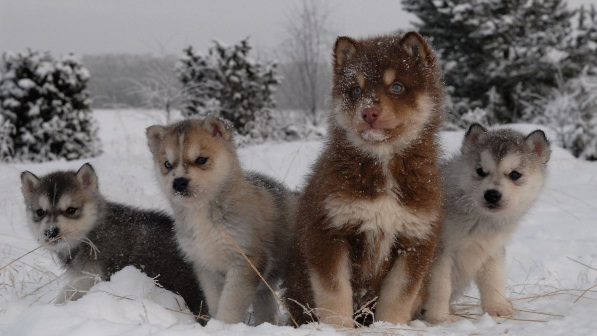 Funny and cute animals in winter 14