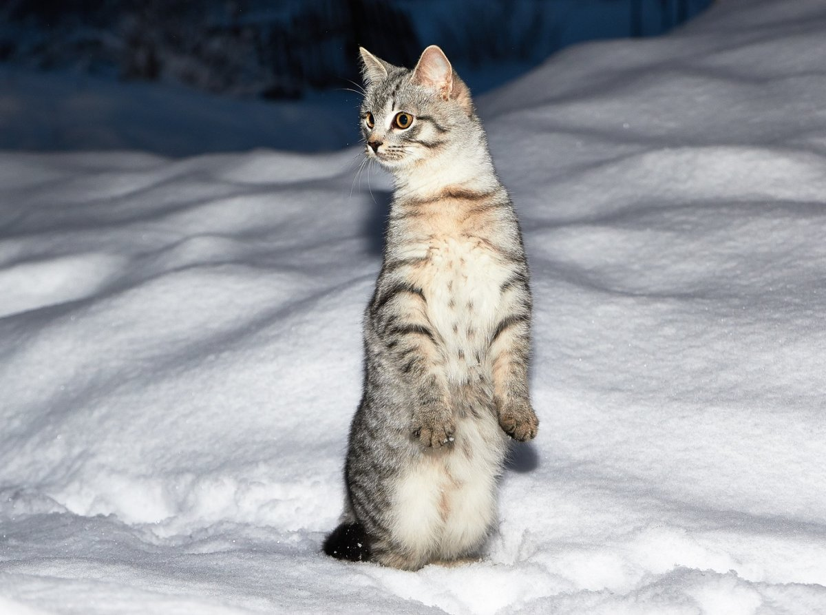 Funny and cute animals in winter 18