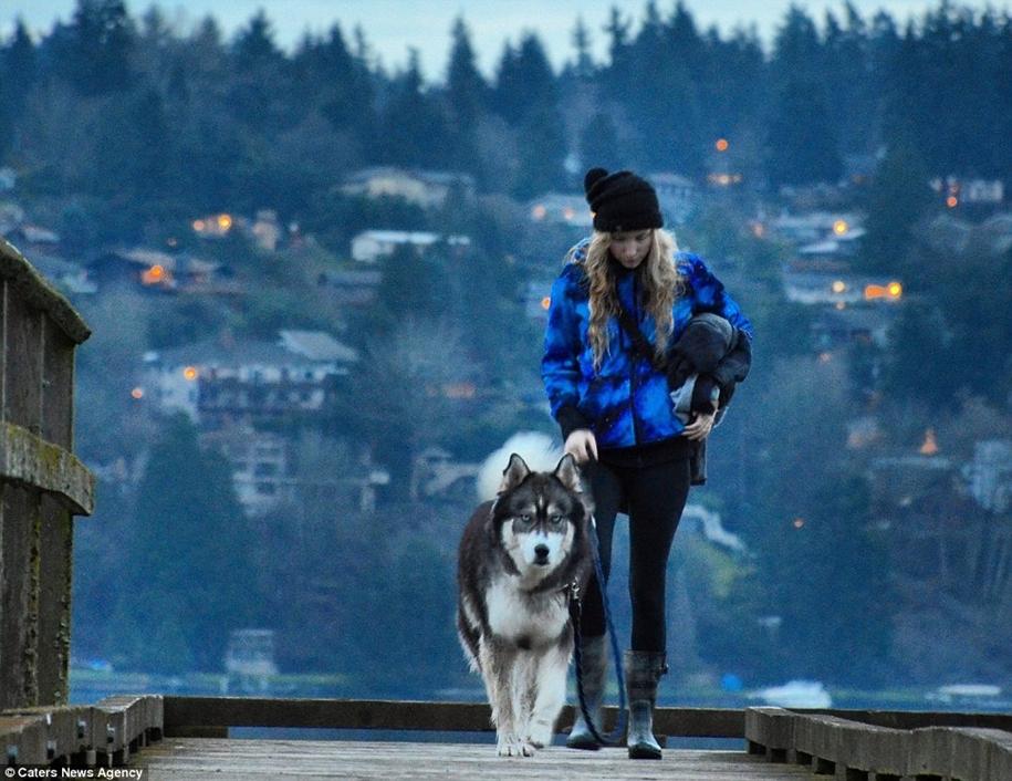 Goldilocks and the wolf 15
