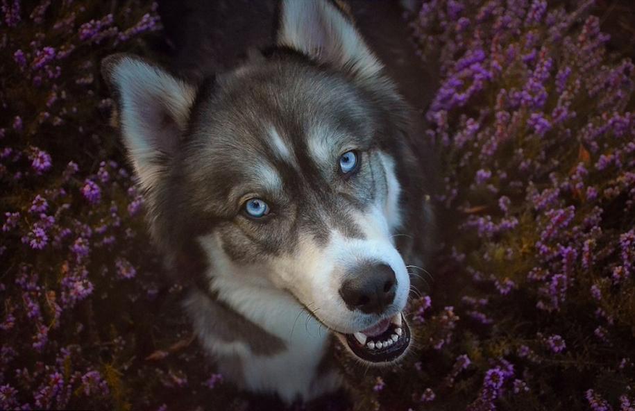 Goldilocks and the wolf 16