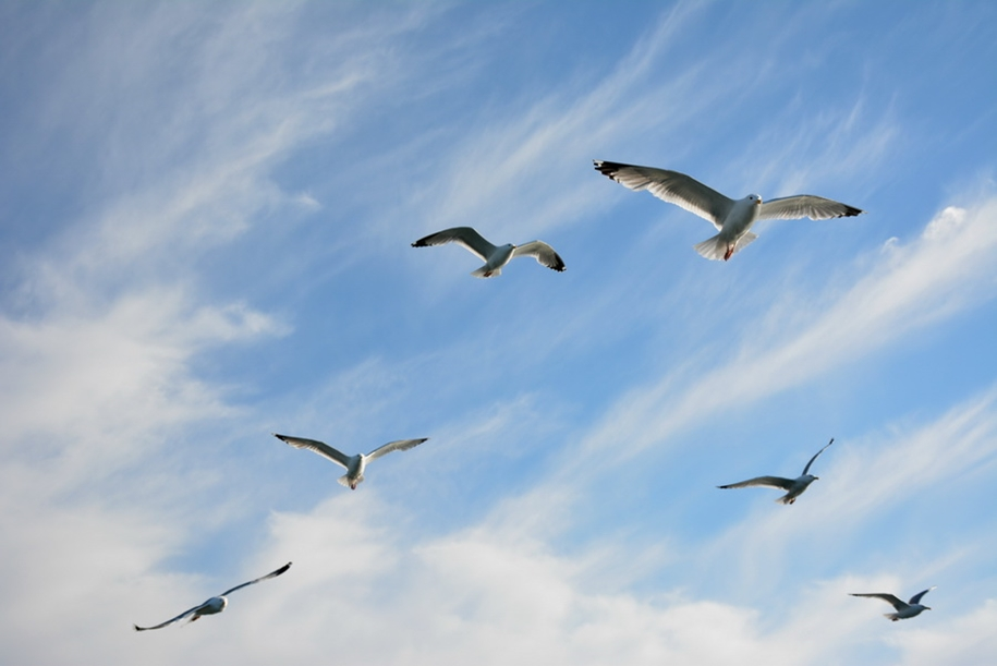 Gulls Of Lake Baikal 14