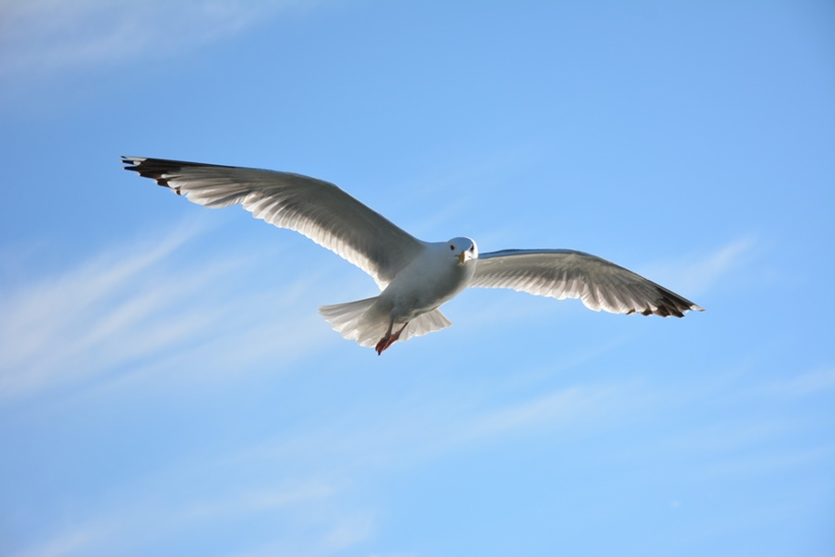 Gulls Of Lake Baikal 15