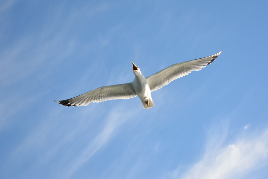 Gulls Of Lake Baikal 16