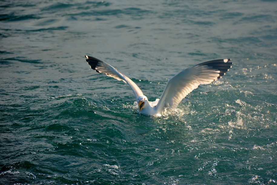 Gulls Of Lake Baikal 18