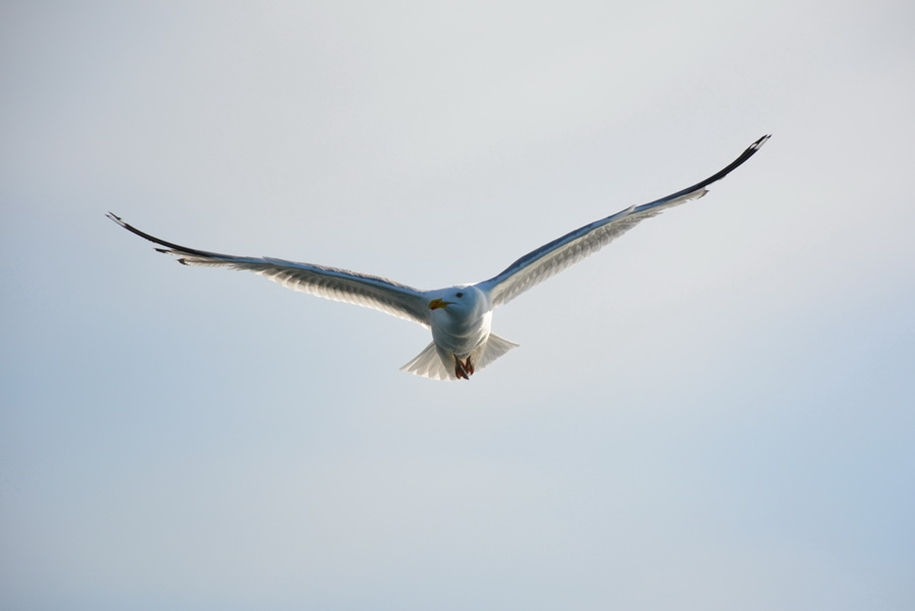 Gulls Of Lake Baikal 21