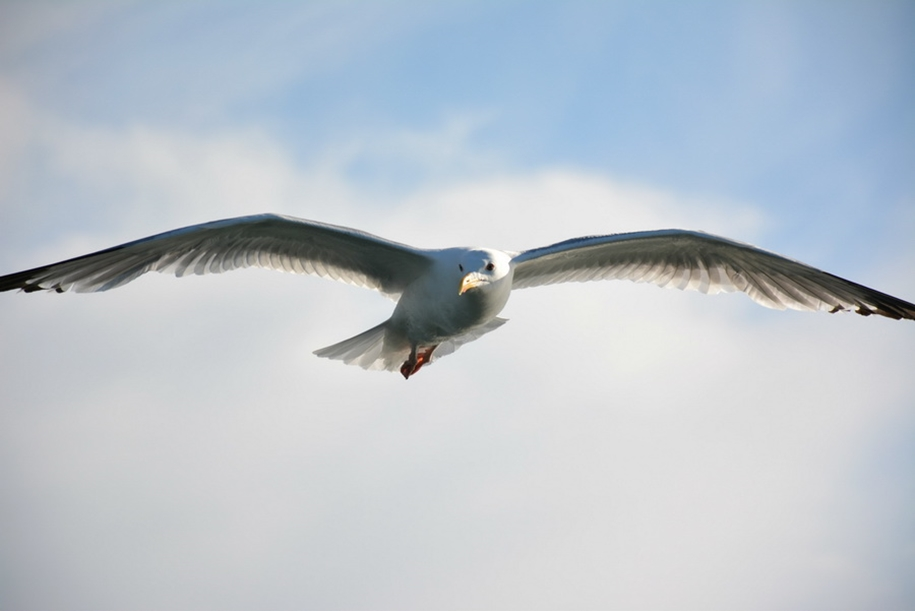 Gulls Of Lake Baikal 22
