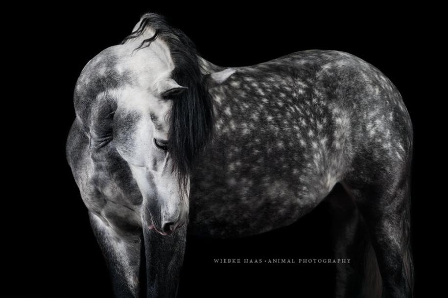 Вместо скучной работы в офисе, она следовала своей мечте и стала конным фотографом