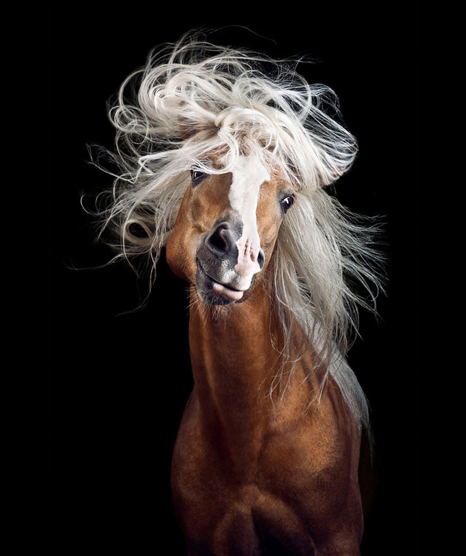Instead of boring office work, she followed her dream and became an equestrian photographer 02