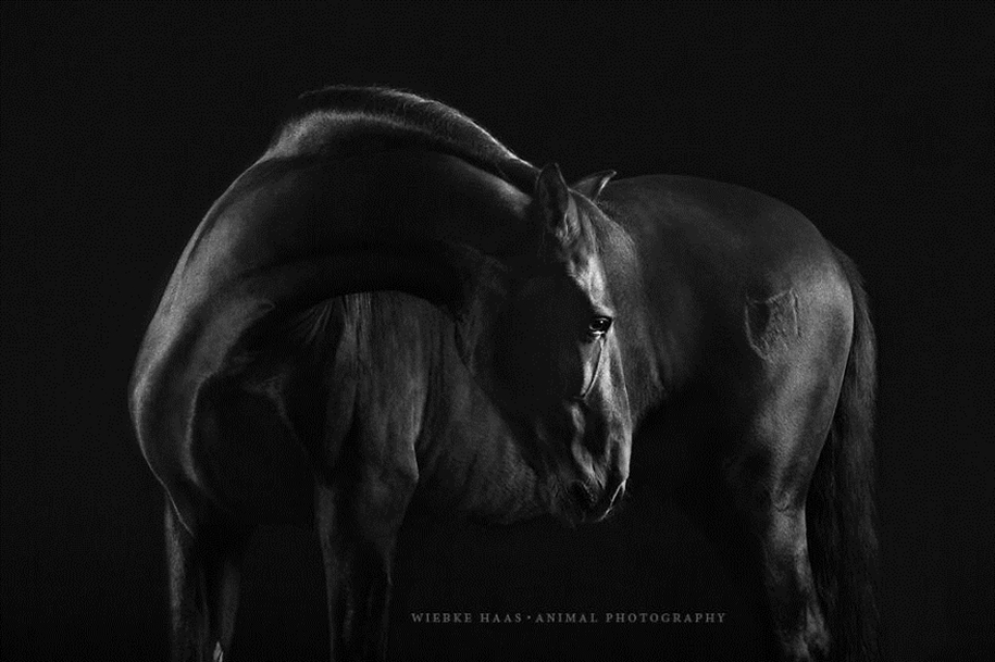 Instead of boring office work, she followed her dream and became an equestrian photographer 03