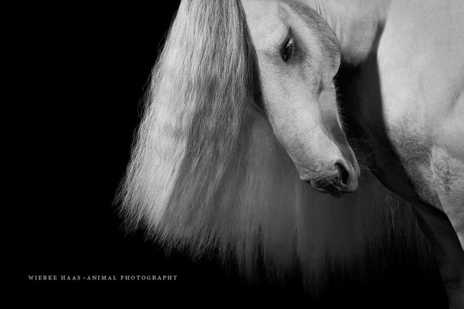 Instead of boring office work, she followed her dream and became an equestrian photographer 04
