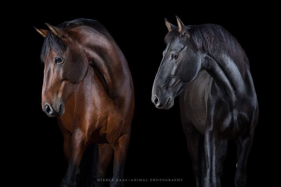 Instead of boring office work, she followed her dream and became an equestrian photographer 05