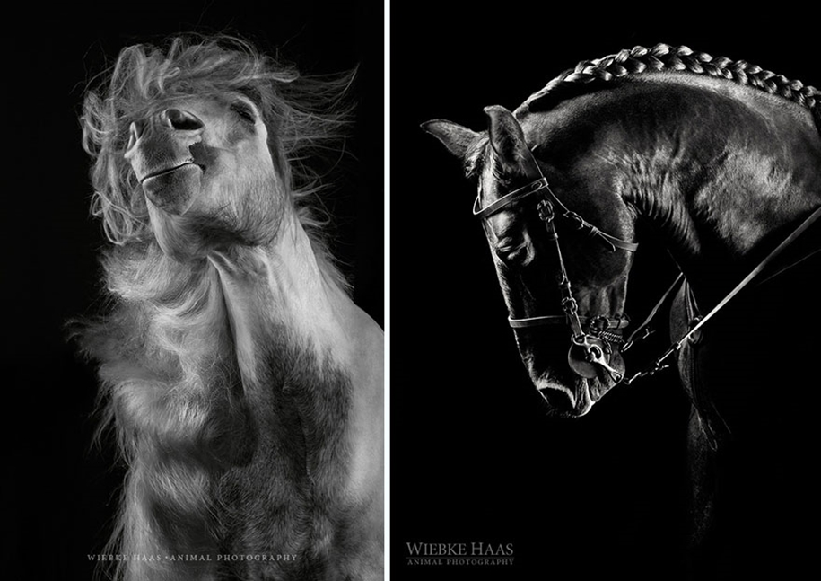 Instead of boring office work, she followed her dream and became an equestrian photographer 06