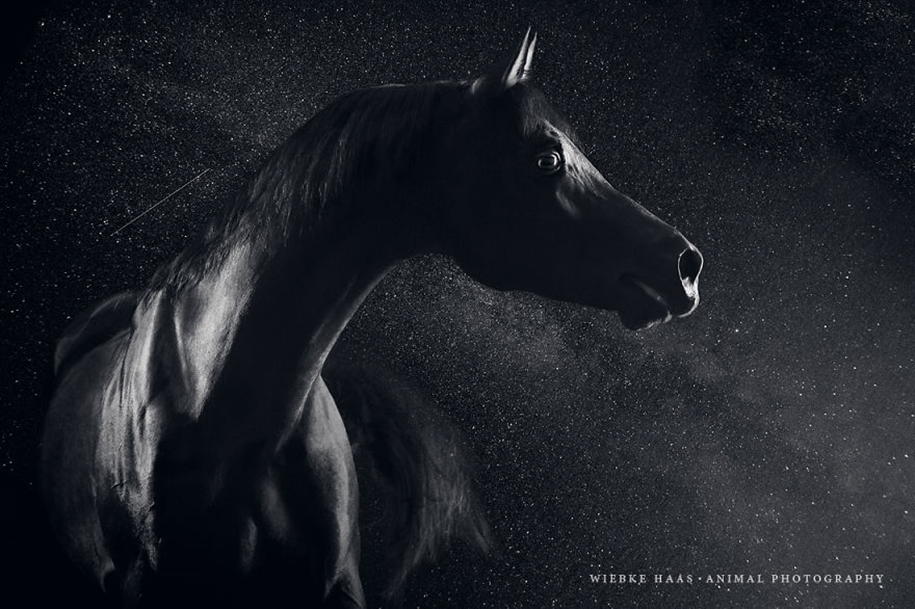 Instead of boring office work, she followed her dream and became an equestrian photographer 07