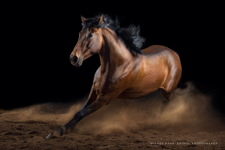 Instead of boring office work, she followed her dream and became an equestrian photographer 08