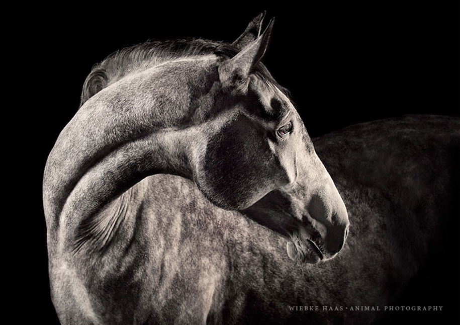 Instead of boring office work, she followed her dream and became an equestrian photographer 10
