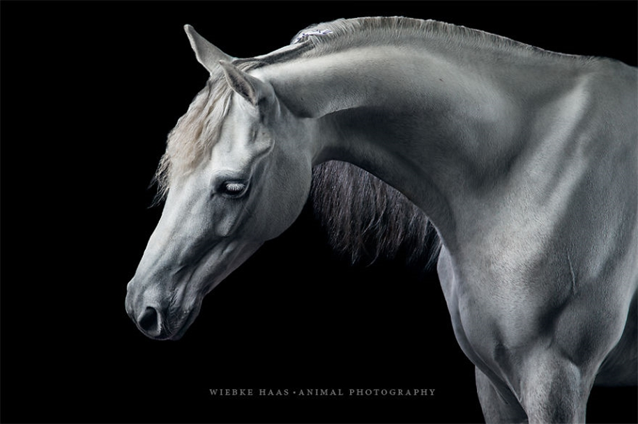 Instead of boring office work, she followed her dream and became an equestrian photographer 11