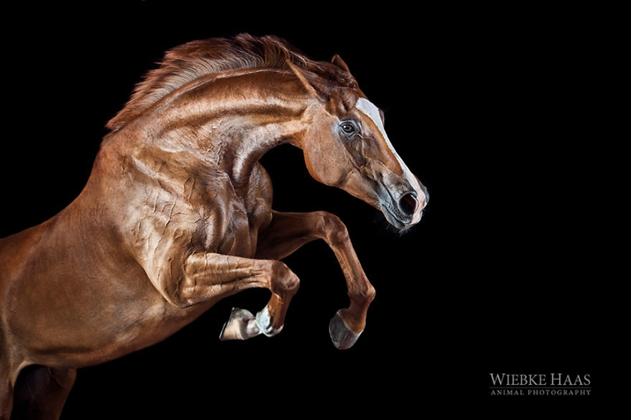 Instead of boring office work, she followed her dream and became an equestrian photographer 12