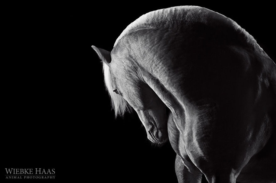 Instead of boring office work, she followed her dream and became an equestrian photographer 13