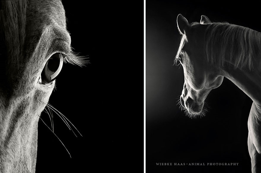 Instead of boring office work, she followed her dream and became an equestrian photographer 14