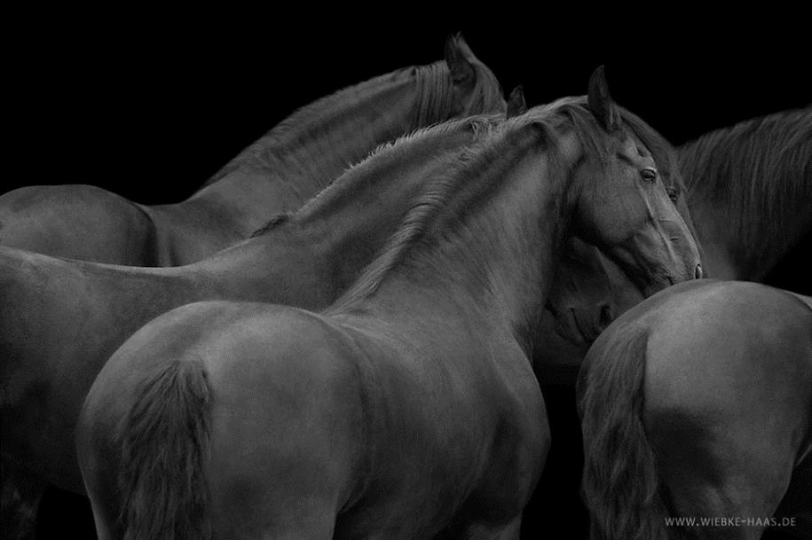 Instead of boring office work, she followed her dream and became an equestrian photographer 15