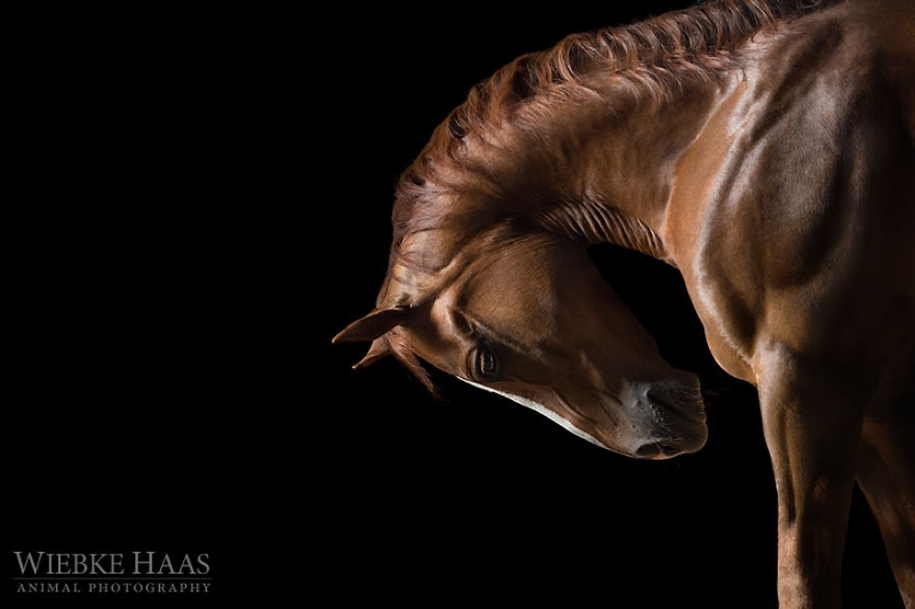Instead of boring office work, she followed her dream and became an equestrian photographer 16