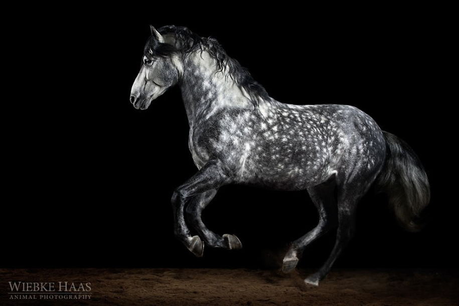 Instead of boring office work, she followed her dream and became an equestrian photographer 17