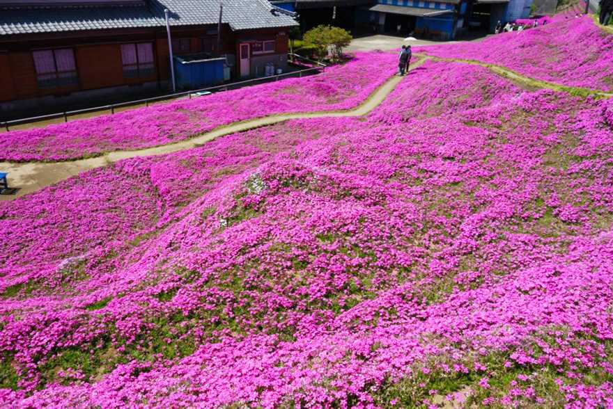 Loving husband for two years has planted thousands of flowers for his wife blinded 03