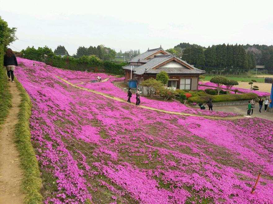 Loving husband for two years has planted thousands of flowers for his wife blinded 05