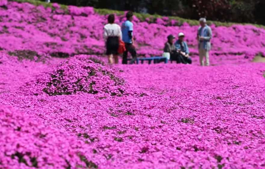 Loving husband for two years has planted thousands of flowers for his wife blinded 07