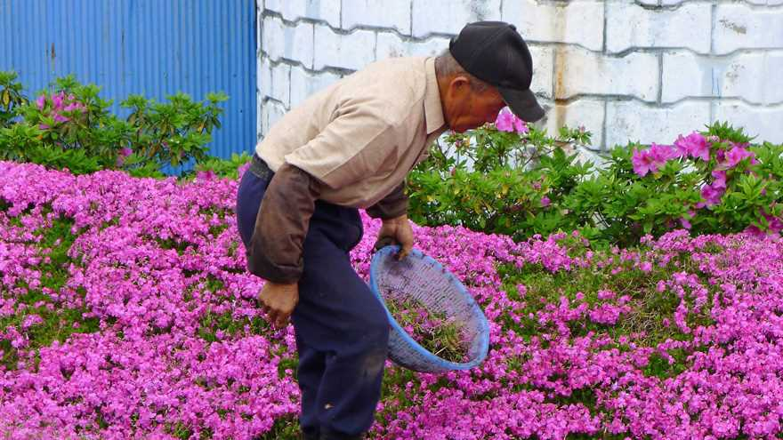 Loving husband for two years has planted thousands of flowers for his wife blinded 09