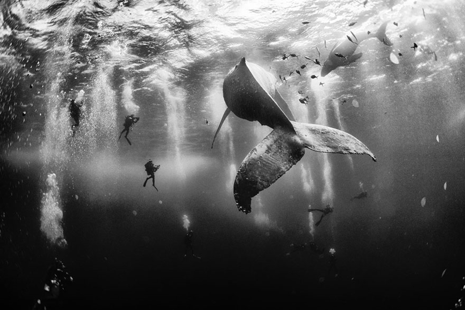 Majestic photos of whales 02