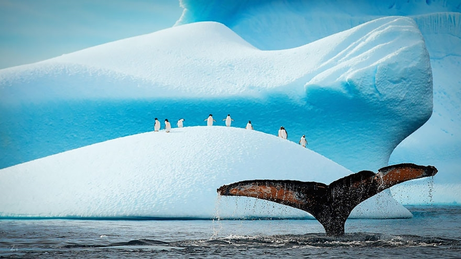 Majestic photos of whales 03