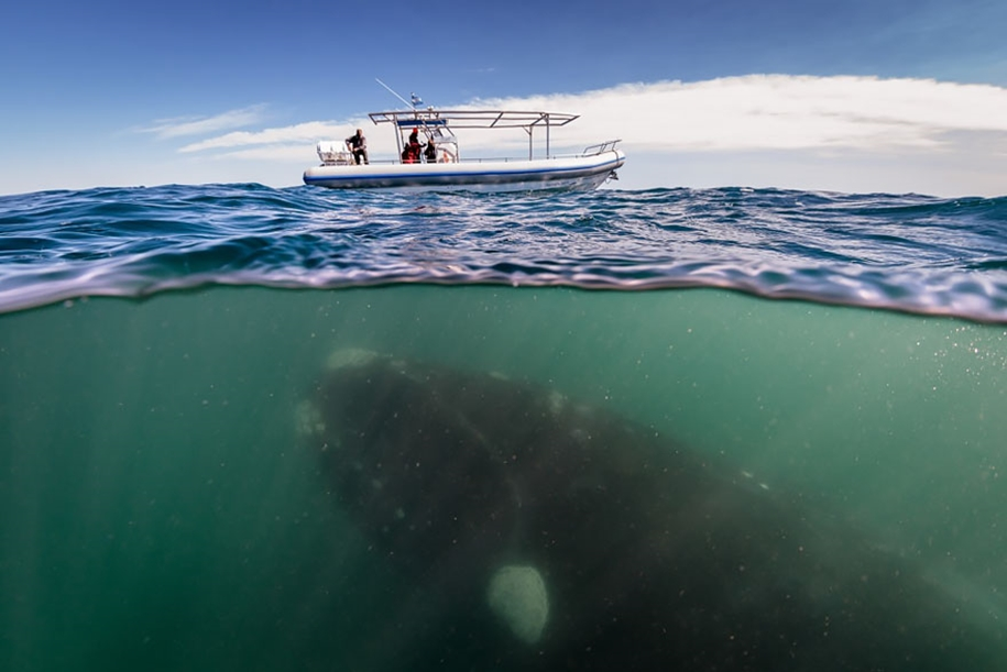 Majestic photos of whales 09
