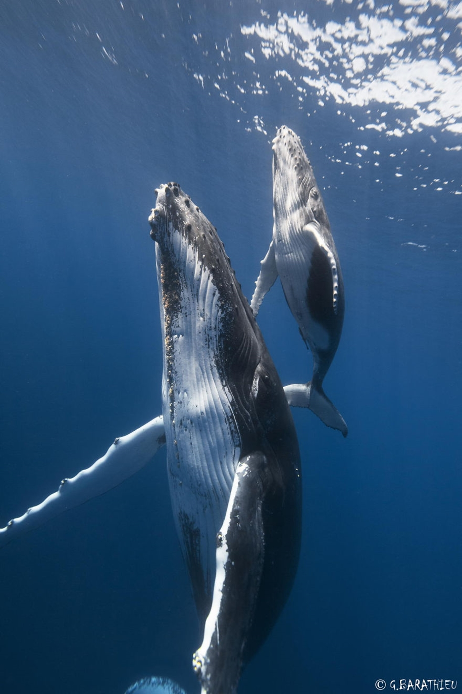 Majestic photos of whales 15