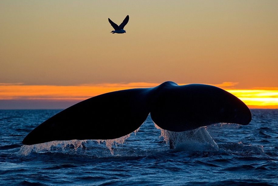 Majestic photos of whales 19